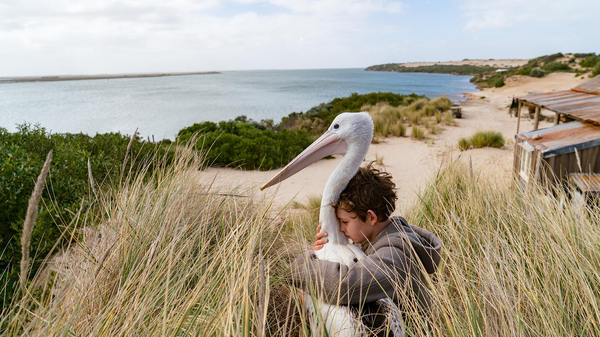 Storm Boy': Review | Reviews | Screen
