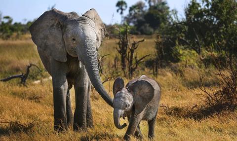 Elephants Tale
