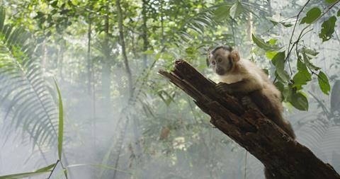 Amazonia_1_____2013_Le_Pacte_Biloba_Films_Gullane