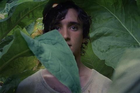 happy as lazzaro c cannes competition